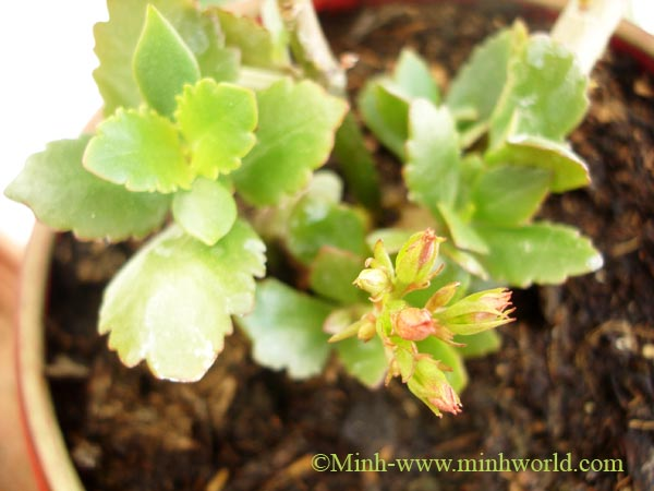 zimmerpflanzen4