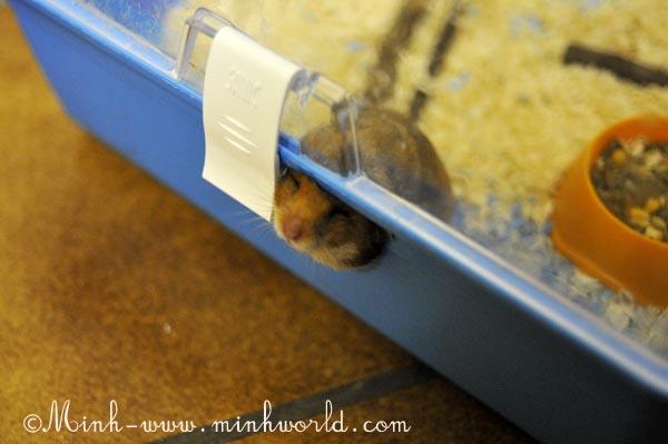 hamster-2