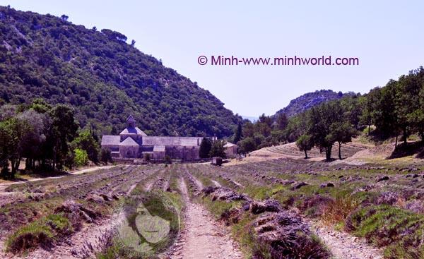 Lavendelfeld vor dem Kloster Abbaye de Sénanque Provence-Alpes-Côte d'Azur